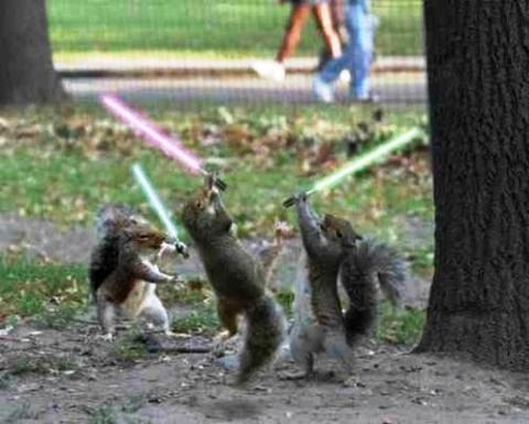 squirrel-star-wars.jpg