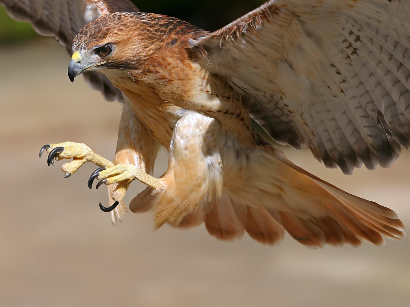 Фотография вы увидете в галереях: птицы нижегородской